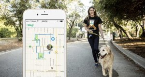 dog walking app development