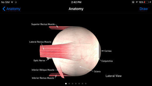 Anatomy of eye sight in Lateral View