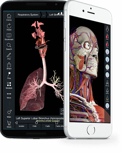 Human Anatomy App Development for iOS Android