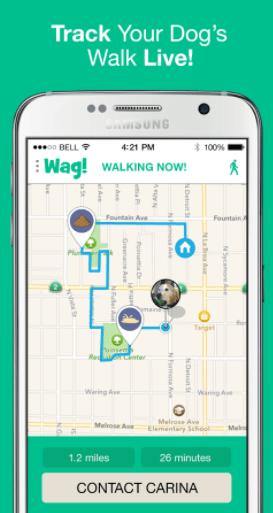 dogs-live-walk
