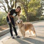 wag-on-demand-dog-walking-app