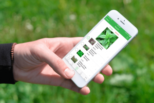 plant-identification-app-development