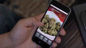 marijuana app development